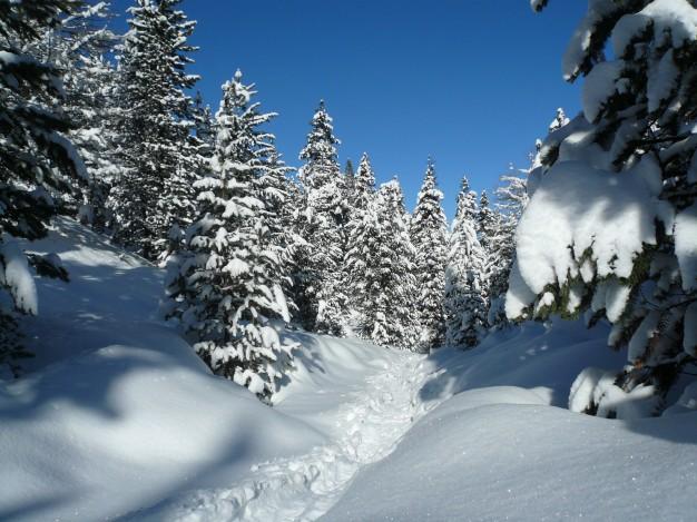 Au départ de Névache, dans la vallée de la Clarée, randonnée en raquette avec les accompagnateurs en montagne du bureau des guides de Serre-Chevalier.